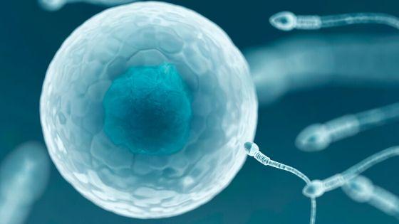 fécondation in vitro en Tunisie